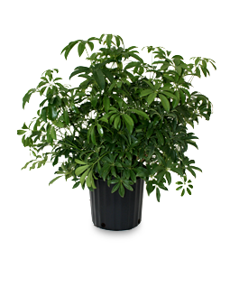 Alpha Botanical