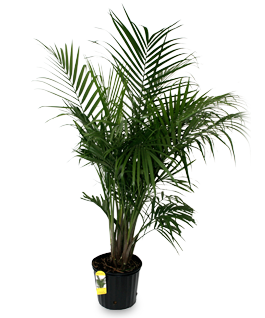 Tropical Plants From Home Depot